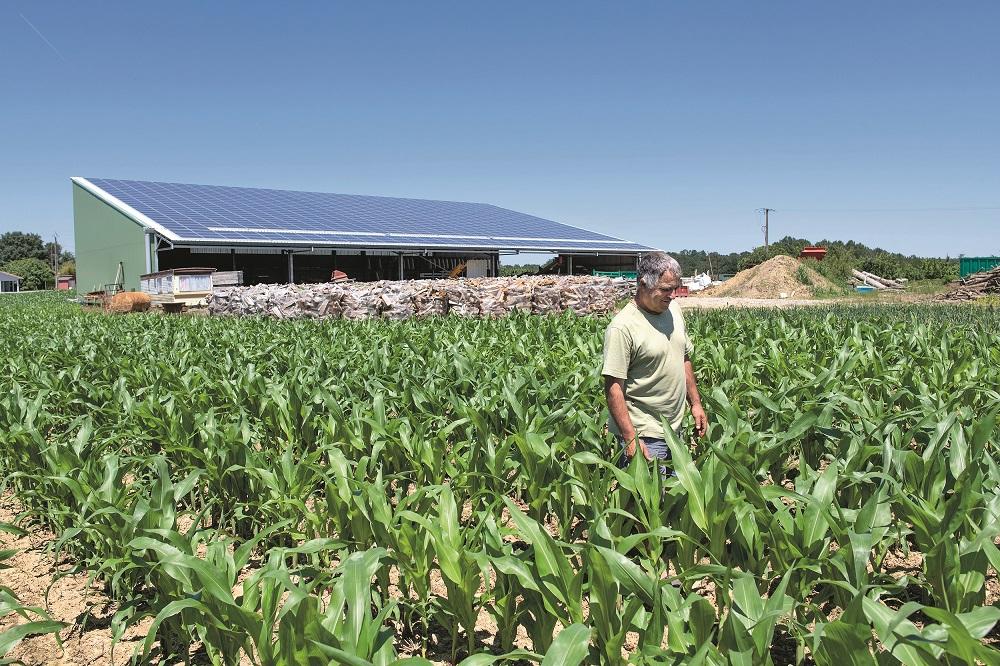 Terre d'énergie homme au champs avec ses vaches