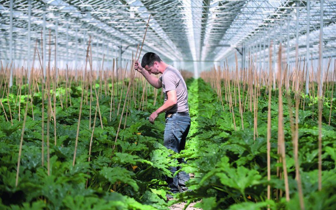 On parle de nous ! Article sur notre serre PV de Mallemort dans le magazine L'Agriculteur Provençal